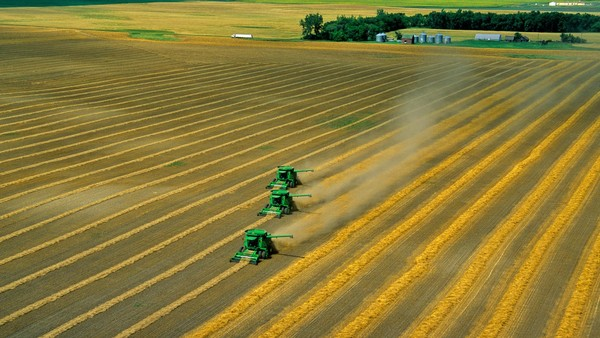 B8WBY3 Three combines harvesting rows of swathed wheat in farmers field aerial view near Colgate North Dakota